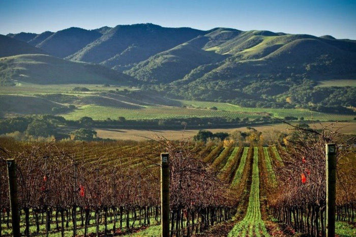 Santa Barbara County Wine: Part 7