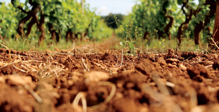 Planting a Vineyard: Does Soil Matter?