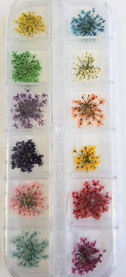 Dried Nail Flowers Set #6