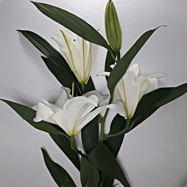 Large White Lillies