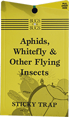 WHITE FLY STICKY TRAPS PACK OF 30 single