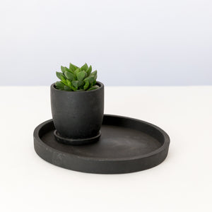 Black Tray and Succulent