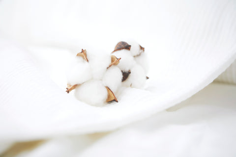 Organic cotton flower on white sheets