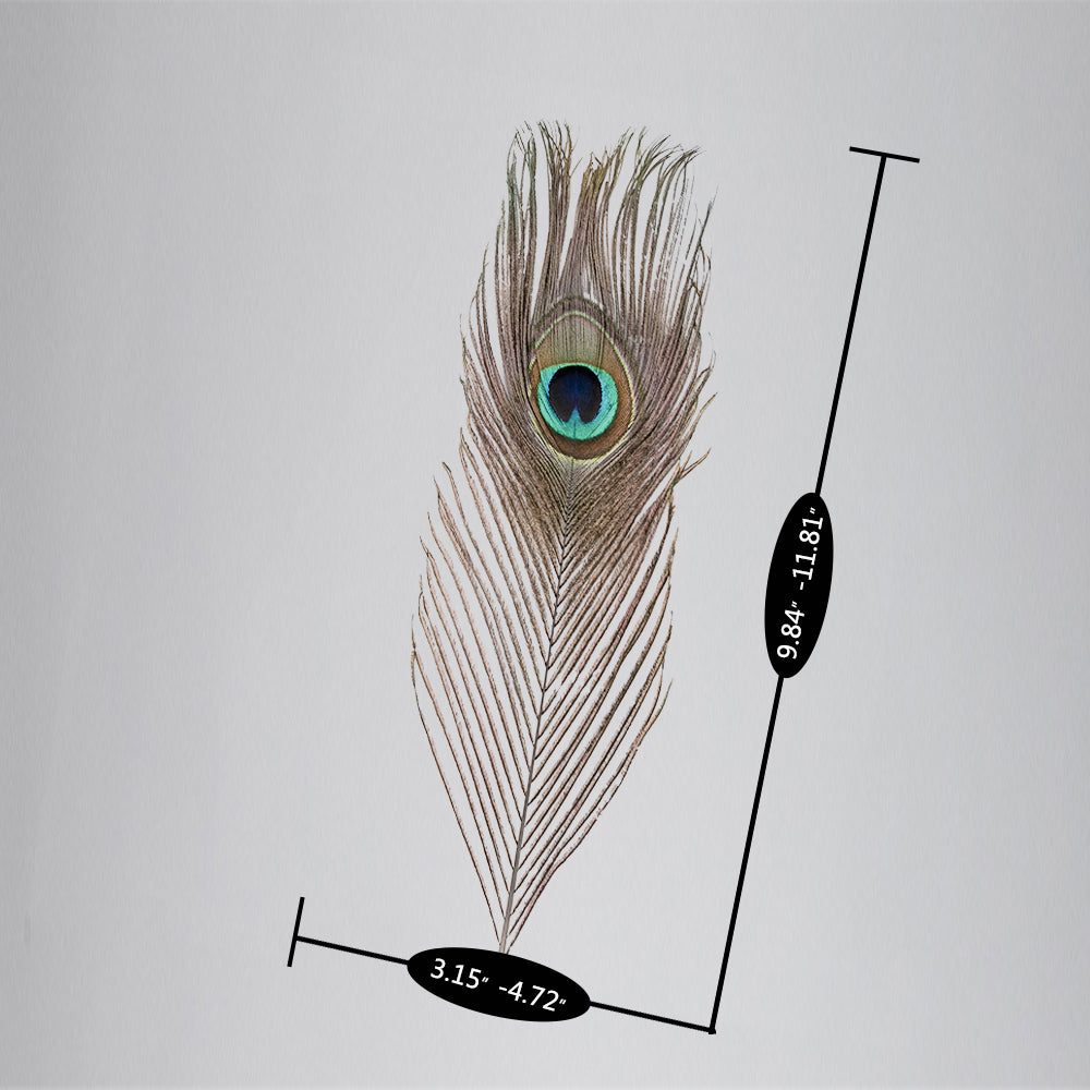 10 x 30cm Natural Peacock Feather House Decoration | 39574535