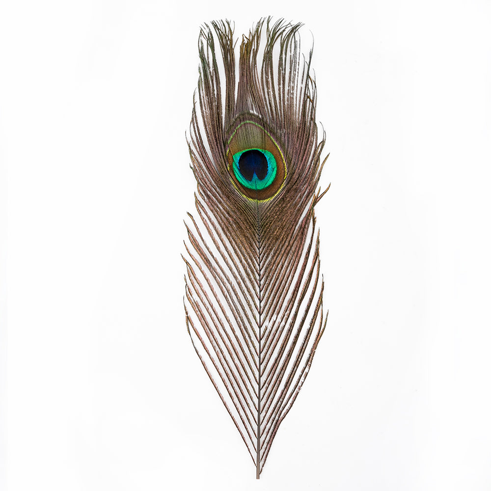100pcs Beautiful Decoration Peacock Feathers Multi-Colored | 73140521