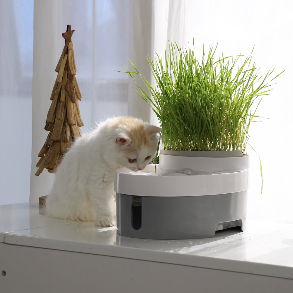 105oz/3.0L Automatic Cat Water Fountain Dog Water Dispenser with food bowl for Cats, Dogs | 22542213