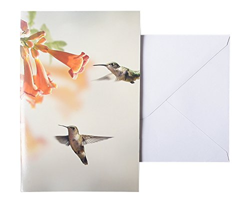 All Occasion Bulk Greeting Cards - Blank Inside - Bird Photographs with and - 48