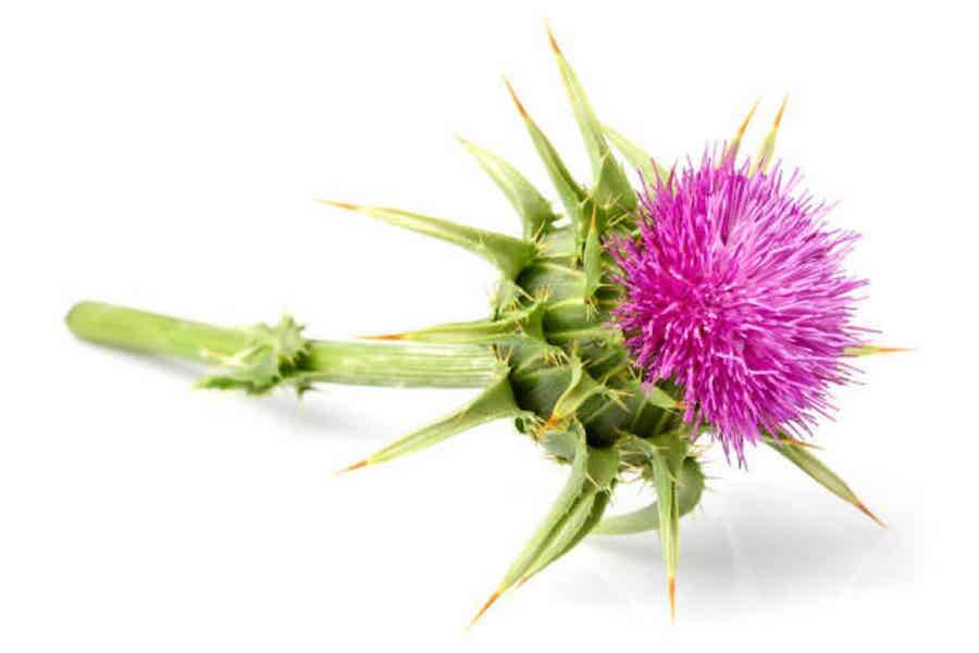 mlk thistle for liver support omnibiotics supplements