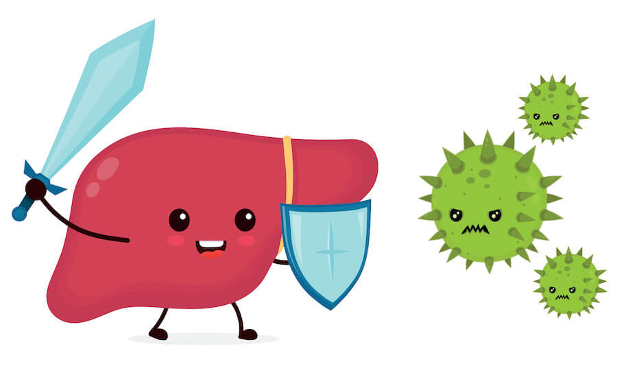 healthy liver animation fighing virus