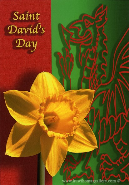 St Davids Day Daffodill Split Greetings Card [std01]