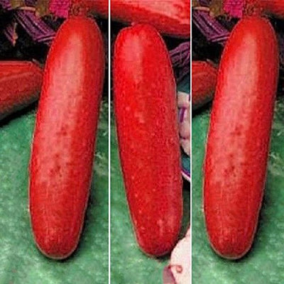 Red Cucumber Seeds Cucumis Sativus Vegetable Seeds Home Garden Plant Fruit 30pcs