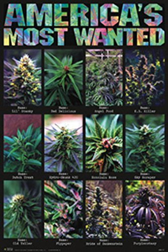 (24x36) America's Most Wanted Pot Plants Art Poster Print