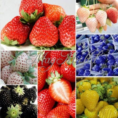 100 PCS Strawberry Seeds Nutritious Delicious Blue Black Fruit Vegetables Seed Blue