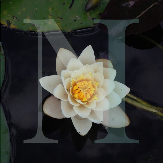 Lotus Flower Candle Bath Body Fragrance Oil Ni Candle