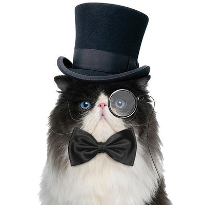 Bow Tie For Cats by Archie McPhee - Shop GagWorks.com