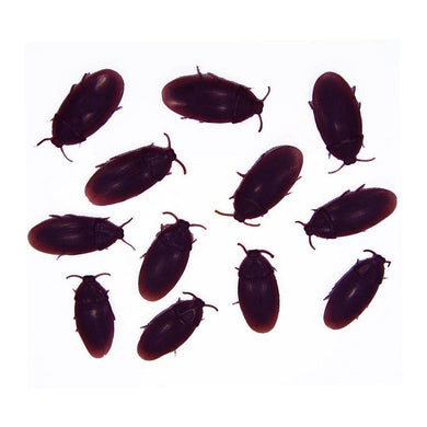 Fake Cockroach - pack of 12