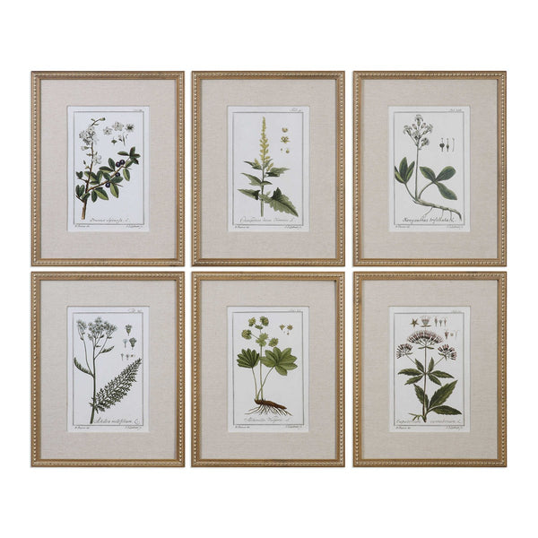 Botanical Study Framed