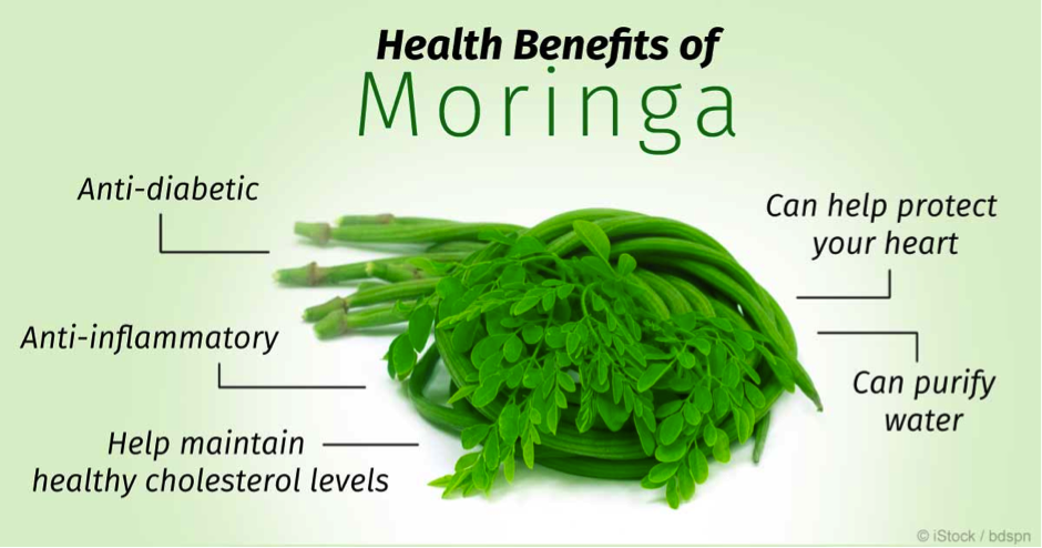 Moringa – The Miracle Tree