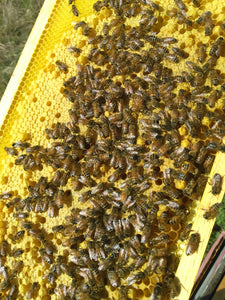 Spring Assessment of Your Hive