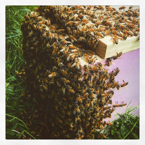 New-bee Honeybee Nucs (deposit only)