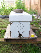 Overwintered Honeybee nucs (deposit only)