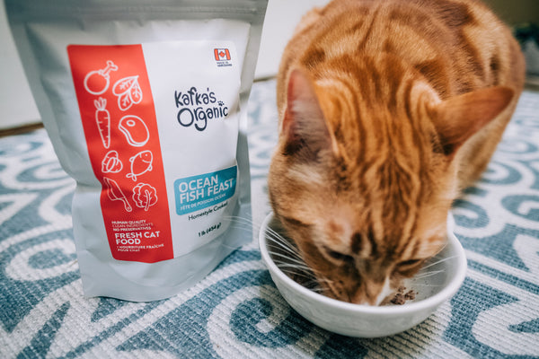 Vaccinated cat with Kafka's fresh pet food