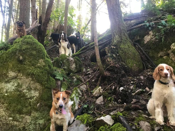 Dogs with Furry Friends&Co on walk in forest