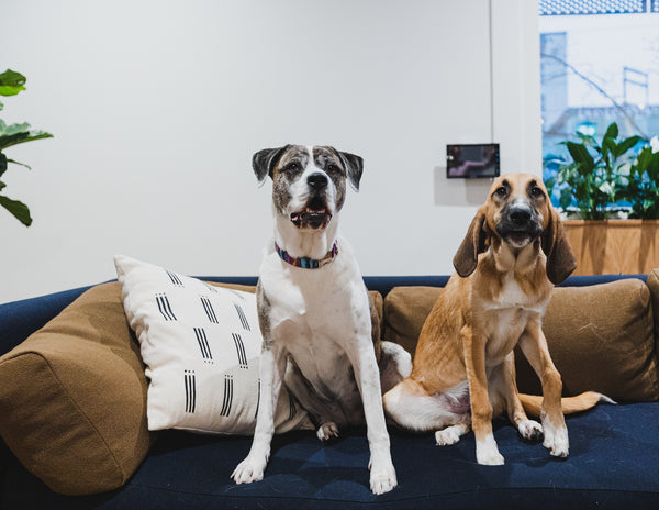 Dogs on couch of pet friendly condo in Vancouver