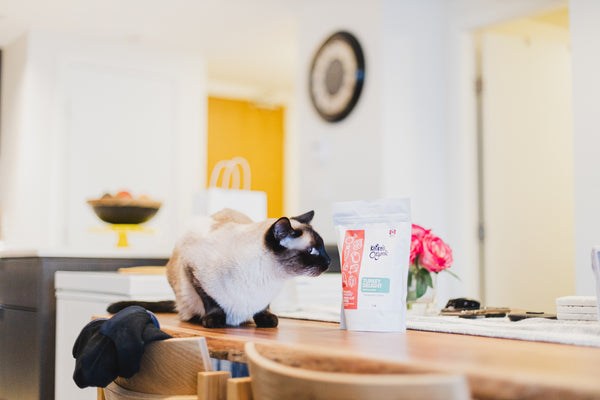 Cat on kitchen table in Vancouver pet friendly apartment