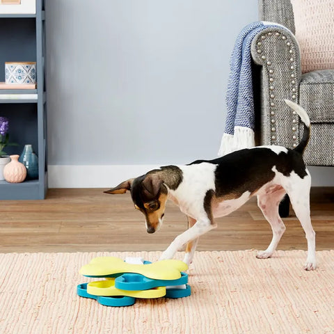 dog getting treats from puzzle toy