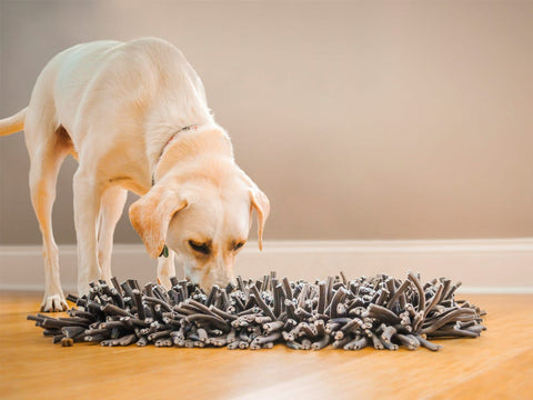 dog with snuffle mat