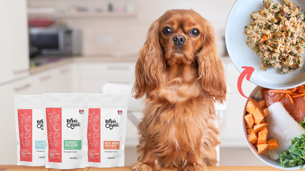 king charles cavalier dog with Kafka's fresh meals