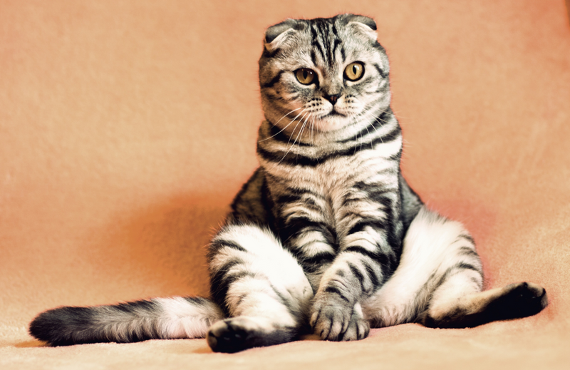 Cat in cute sitting position