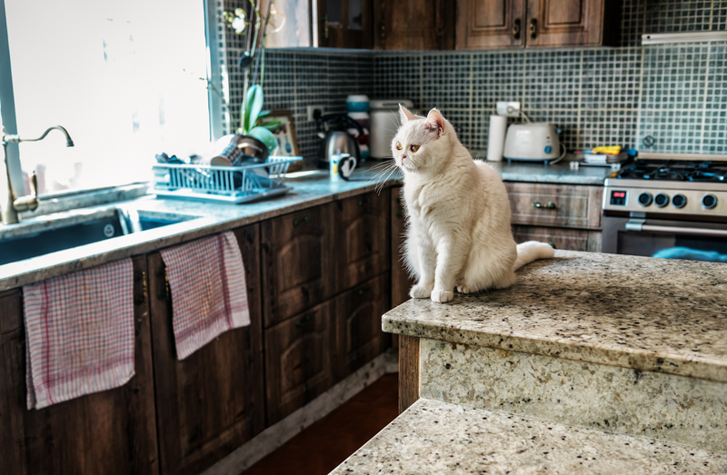 Picky cat sitting on kitchen counter