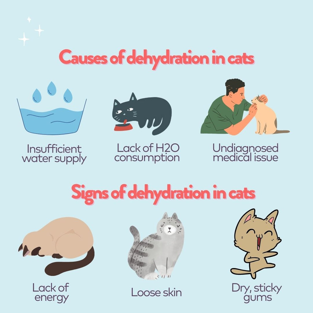 infographic of causes and signs of dehydration in cats