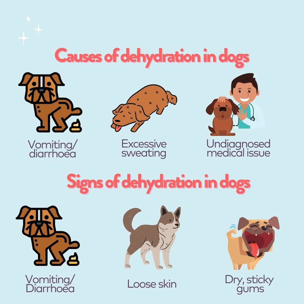 Infographic of signs and causes of dehydration in dogs