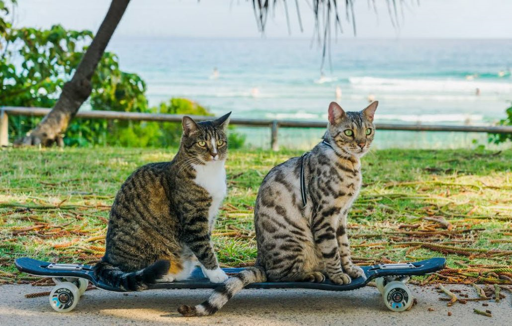cats adventure, adventure cats, cats skateboarding, skateboard cat, tropical paradise cats, cats in paradise