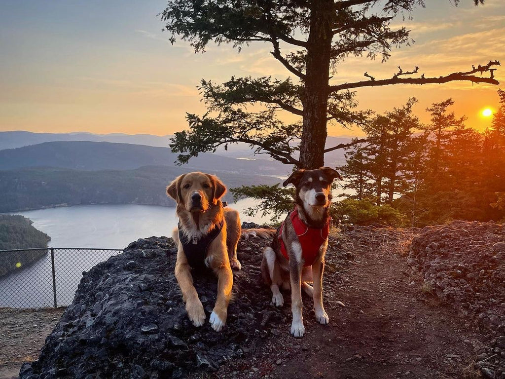 two dogs at salt spring island in Vancouver at sunset