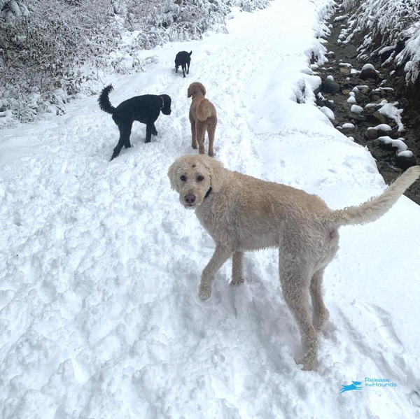 Dogs walking in the snow with Release the Hound