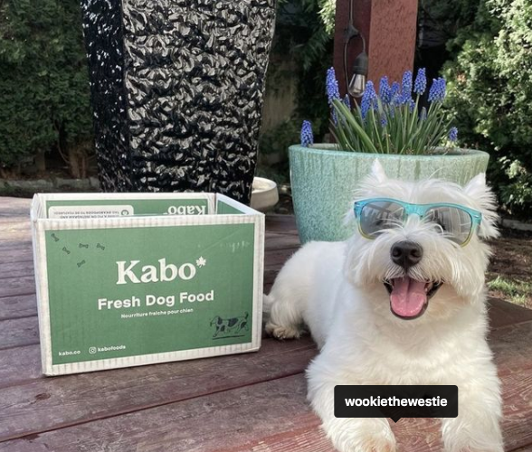Dog is laying on a deck with a box of Kabo Fresh pet food sitting next to him