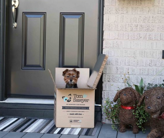 small dog is sitting in a Tom and Sawyer fresh pet food delivery box on the front step of a house