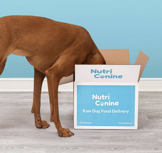 dog is sticking his head inside a box of Nutricanine raw pet food delivery