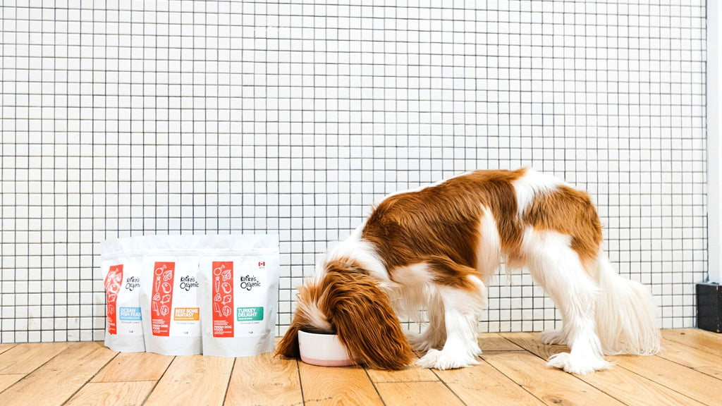 a dog is eating out of a bowl and 3 bags of Kafkas organic fresh pet meals are placed on the other side