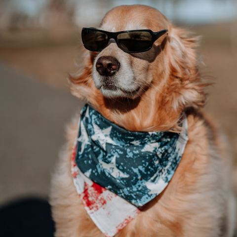 A golden retriever is wearing a pair of sunglasses and a USA branded bandana