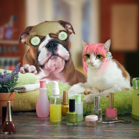 A cat and dog are sitting having appeared to just undergone a makeover and are currently having a spa day. There are nail polish bottles on the counter in front of them