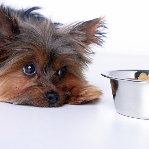 dog with upset stomach, bone broth benefits for dogs and cats