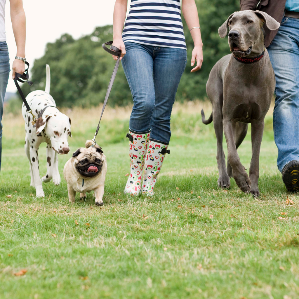 dogs and their owners walking in a park