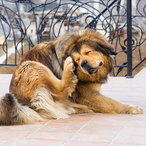 how to tell if you dog has dry skin