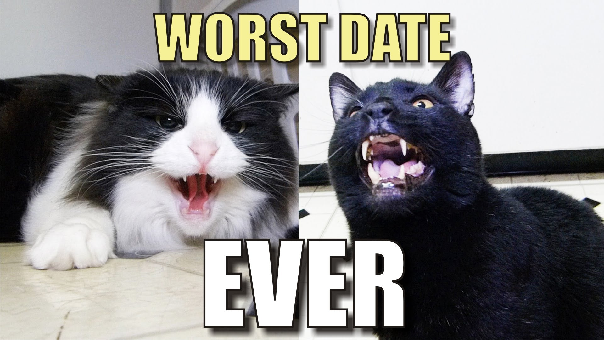 bad cat date, bad date, cats from hell, temper cat, cat temper, dating, cats