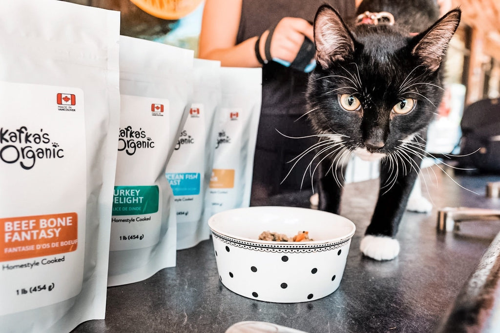 find-the-best-cat-food-cat-food-allergies
